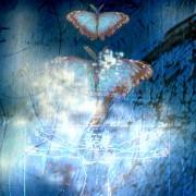 Traumpaar Schmetterlinge im Bauch